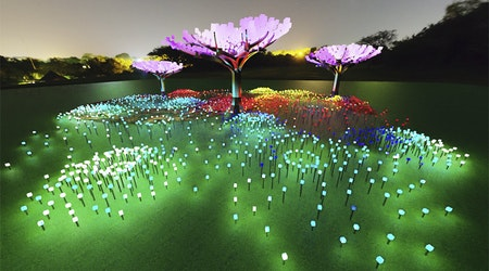Illuminated LED 'forest' coming this winter to Golden Gate Park's Peacock Meadow