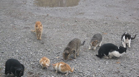 Cat lovers furious that East Bay Regional Park District is shooting feral felines