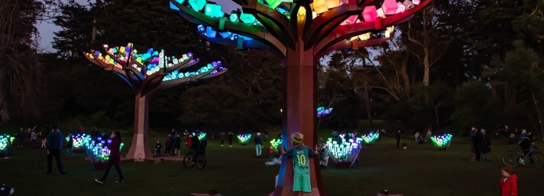 Illuminated LED forest 'Entwined' returning to Golden Gate Park for the holiday season