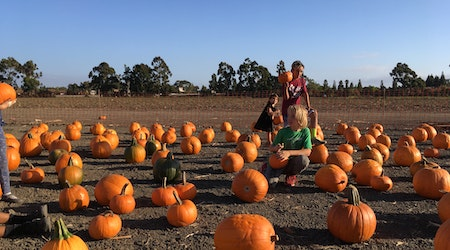 Nine pumpkin patches to visit around the Bay Area this spooky season