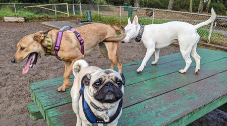 Golden Gate dog park fixed up with $2.4 million renovation