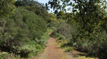 New fees, capacity limits, and name change for newly public Palo Alto park