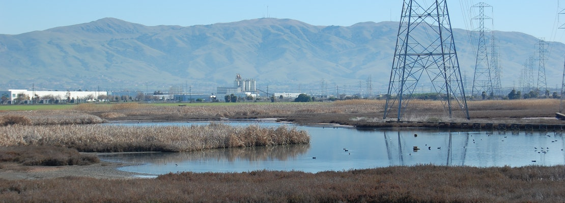 Environmentalists appeal the approval of a housing development on landfill along Newark wetlands
