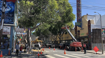 The 24th Street ficus tree removal project is underway