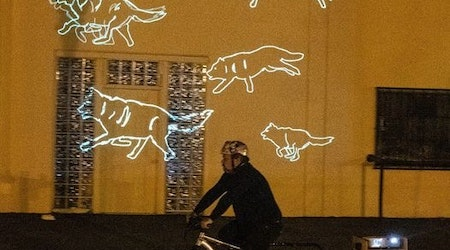 Why digital wolves are racing around Palo Alto (and where to see them)