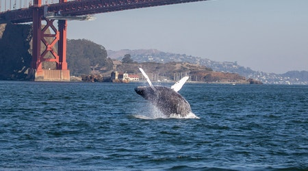 Bay Area day trips: Summertime on the San Francisco Bay