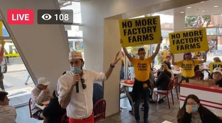 Animal rights activist invade Fisherman' Wharf In-N-Out to protest factory farming