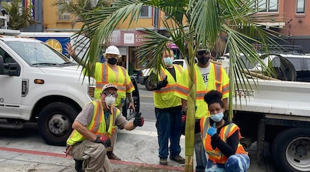 After two-year delay, Public Works replants vandalized and dead Castro Street palms