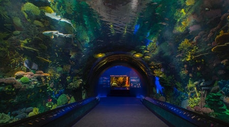 Explore global culture, marine wildlife without leaving NYC this summer