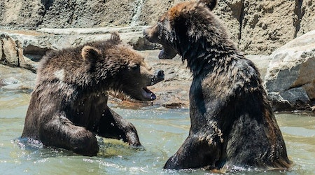 New California Trail exhibit opens at Oakland Zoo