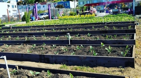 New Bayview growers market debuts Saturday
