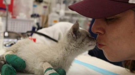 SF agencies mobilize to save animals injured or lost in Camp Fire — here's how you can help