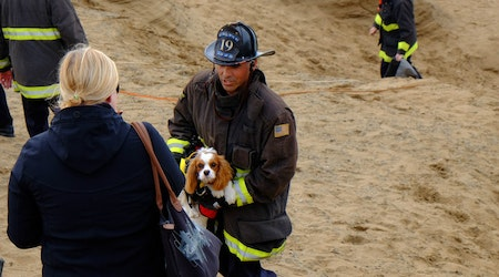 Scenes From A Cliffside Dog Rescue At Fort Funston