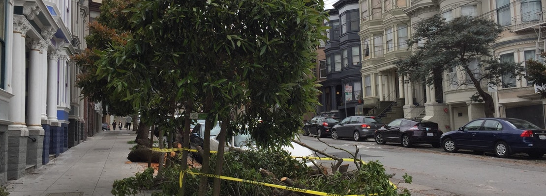 Trees Downed Across The City After Weekend's Big Storms