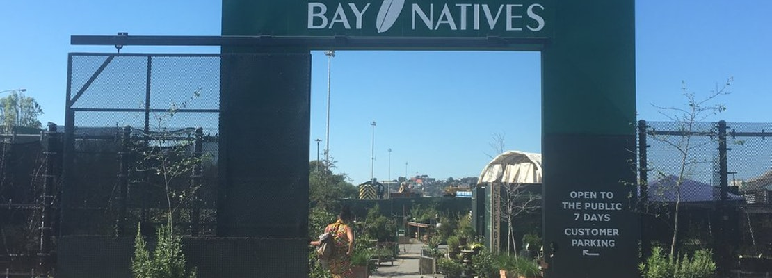 Bay Natives Nursery Energizes The Ecosystem Of Bayview