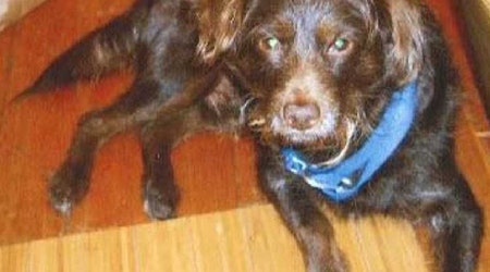 Police Seek Public's Help In Case Of Divisadero Dognapping