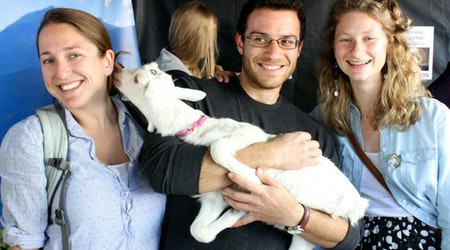 Event Spotlight: Baby Goats, Goat Cheese & More At Ferry Building Goat Festival