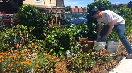 San Francisco's Hottest New Garden Is Right In Front Of The DMV