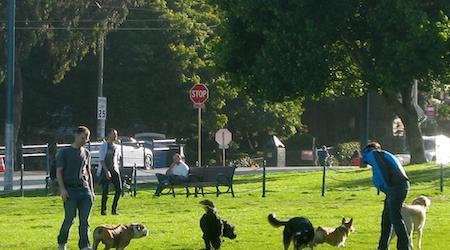 Rumors Of Poisoned Dog-Park Meatballs Return, This Time In Duboce Park
