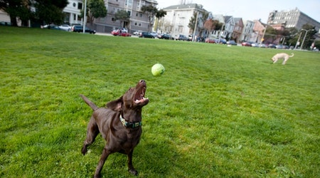 Animal Control Scouts Duboce Park, Finds No Evidence Of Poisoned Meatballs