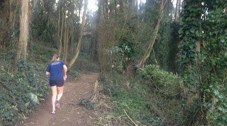 UCSF Unveils Draft Proposal For Managing Mt. Sutro's Ailing, Aging Eucalyptus Forest