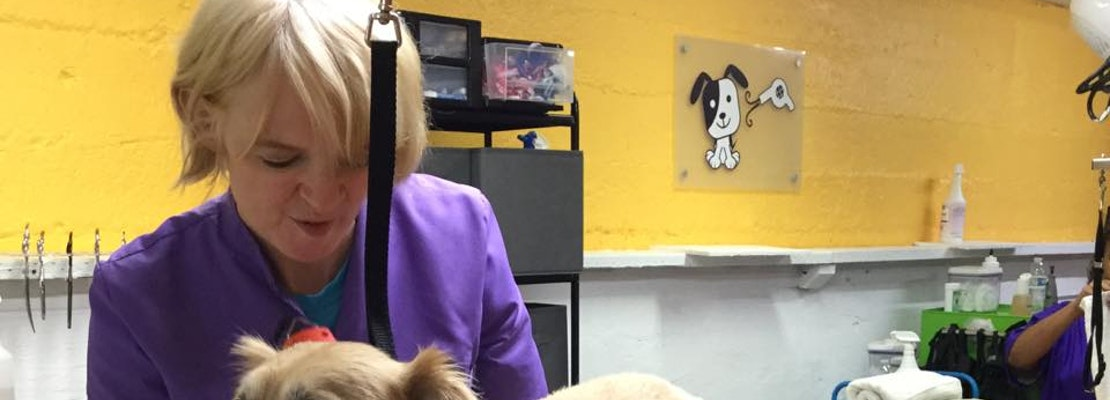 Meet Doggie Day Spaw, North Beach's Newest Stylist For Particular Pooches
