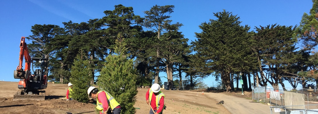 Planting For 50 Donated Alamo Square Trees Breaks Ground