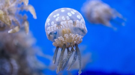 Valentine's Day at the aquarium, and other learning events in Seattle this week