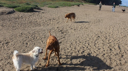 What New Dog Restrictions On SF Beaches Mean For You & Your Dog Walker
