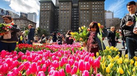 SF weekend: 100,000 tulips in Union Square, Black Cuisine Festival, Russian cultural festival, more