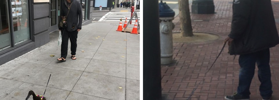 Spotted: Bunny, Duck Walkers Keep San Francisco Weird [Updated]