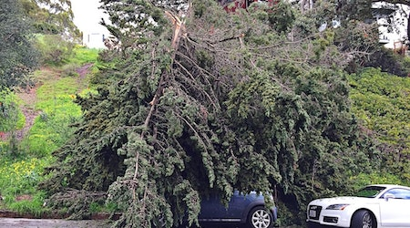 Spotted: Large Fallen Tree Collapses On Mini Cooper On States Street