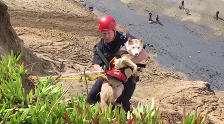 Firefighters Rescue Dog From Cliffs At Fort Funston [Video]