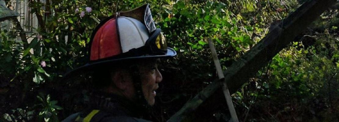 Fallen 100-Foot Tree Knocks Power Lines Down In West Portal