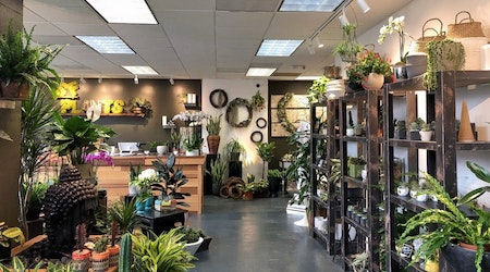 'SF Plants' brings potted plants, succulents, tools and more to Polk Street
