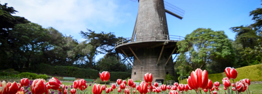 Getting To Know The Windmills Of Golden Gate Park