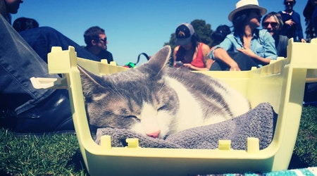 SF weekend: Caturday in Dolores Park, cooking with Brown Sugar Kitchen, doggie Easter egg hunt, more