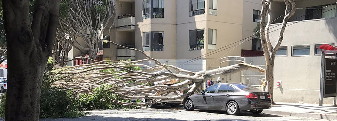 Blustery winds knock down several trees on Saturday, damaging power lines, parked cars