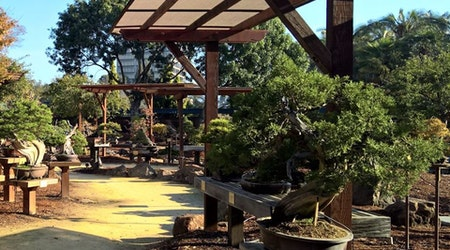 Lake Merritt's Bonsai Garden Under Renovation