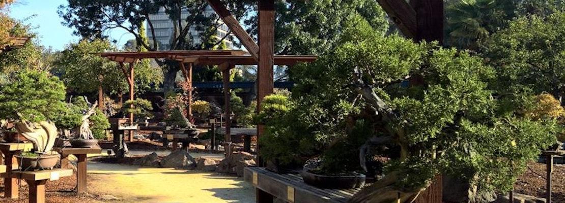 Lake Merritt S Bonsai Garden Under Renovation