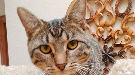 Kittens in Oklahoma City looking for their furr-ever homes