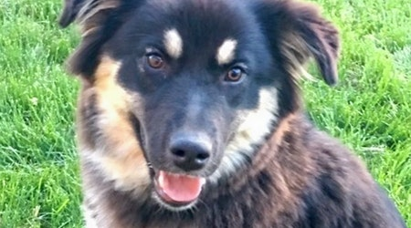 Dogs in Colorado Springs looking for their furr-ever homes