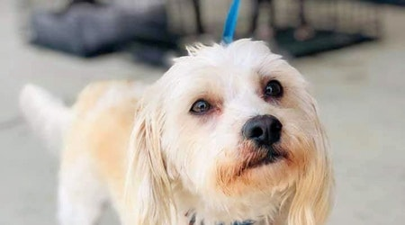 Dogs in Oklahoma City looking for their furr-ever homes