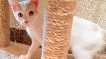 Kittens in Oklahoma City looking for their fur-ever homes