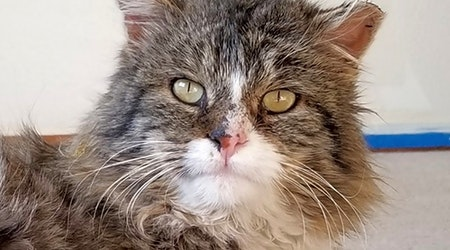 Cats in Colorado Springs looking for their fur-ever homes