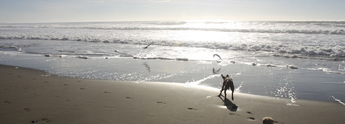 Rep. Speier Passes Amendment To Protect Off-Leash Activity In Beaches, Parks