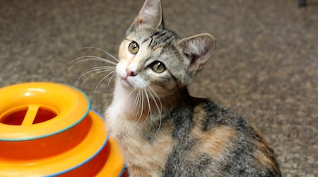 Kittens in Memphis looking for their fur-ever homes
