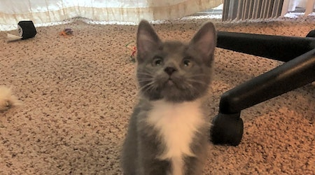 Kittens in Tulsa looking for their fur-ever homes