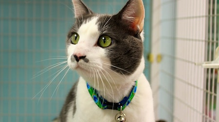 Cats in Memphis looking for their fur-ever homes