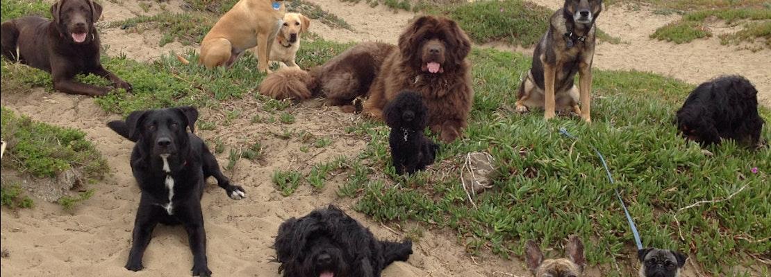 Run, Spot, Run: Park Service Drops Plans To Update GGNRA Dog Rules